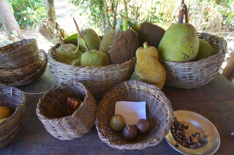 Tropical fruit like jackfruit, starfruit and cacao are staples on the farm.