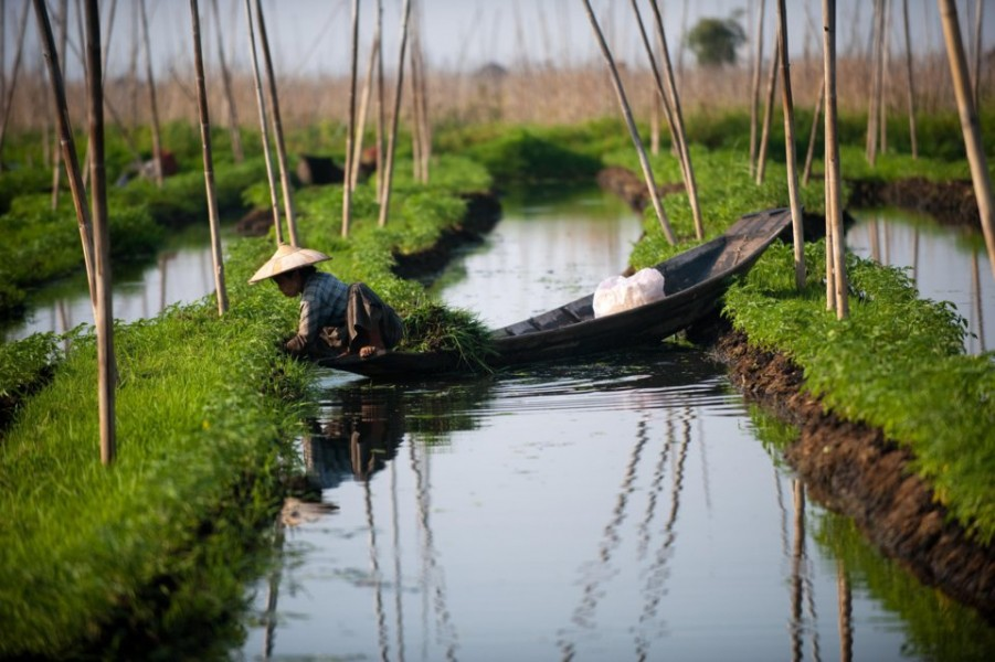 Floating gardens of Lake Inle, Myanmar. Photo Credit: www.synergy-tours.com