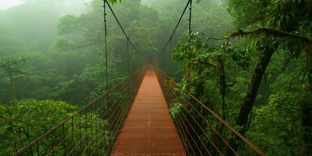 An Aussie Walkabout: My Journey to the NuSeed Gathering Costa Rica