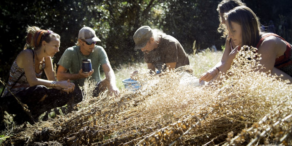 Saving Seeds and Doing it Cosmically at a Biodynamic Farm in Oregon