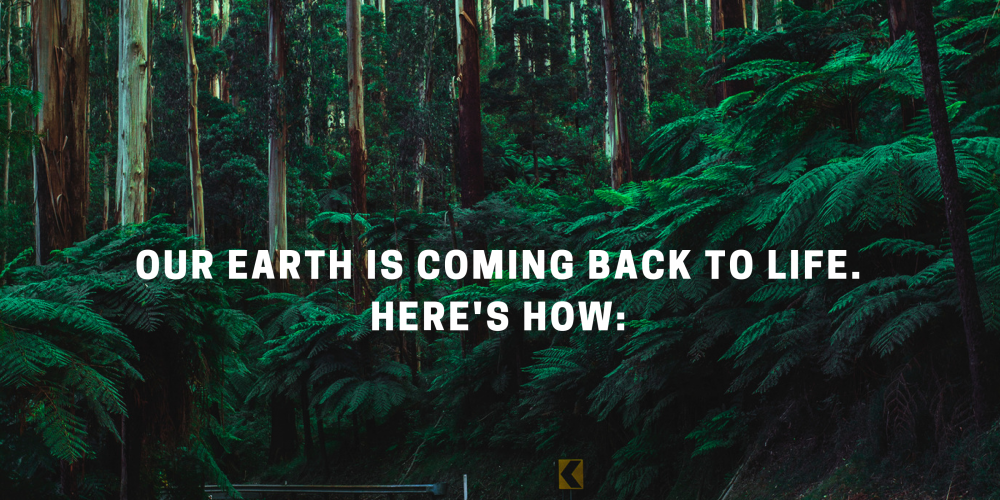 Our Earth is Coming Back to Life. Here's How: