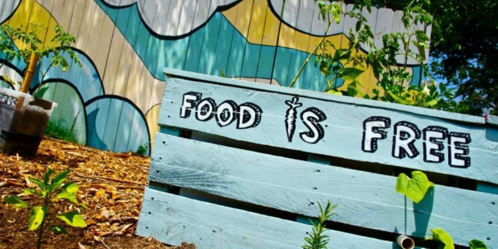 An Eye-Opening Interview with Food is Free Founder, John Edwards