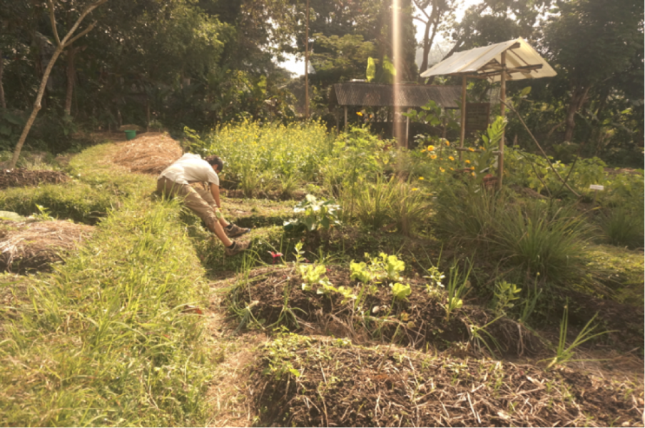 The farm is seeing a transition into productive polycultural market gardening, as Bodhi experiments with new systems and working models. One of such is the Chinampas.